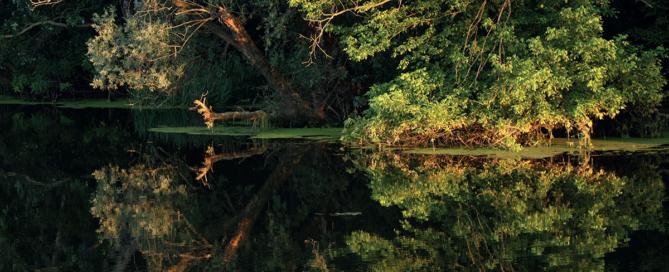 Special nature reserve Carska Bara